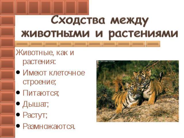 Животные, как и растения:Имеют клеточное строение;Питаются;Дышат;Растут;Размножаются.