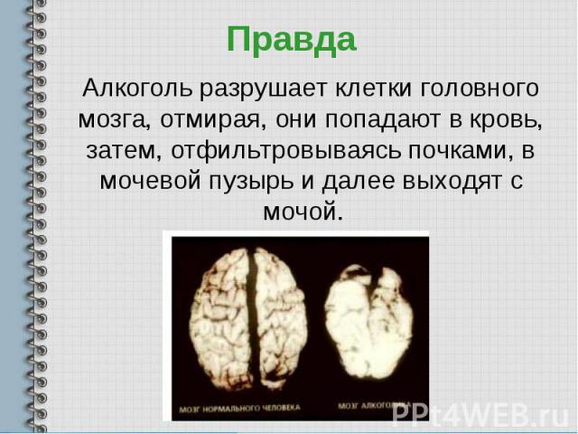 Алкоголь разрушает клетки головного мозга, отмирая, они попадают в кровь, затем, отфильтровываясь почками, в мочевой пузырь и далее выходят с мочой.