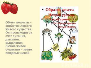 Обмен веществ – свойство любого живого существа. Он происходит за счет питания,