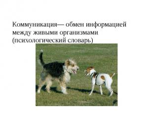 Коммуникация— обмен информацией между живыми организмами. (психологический слова