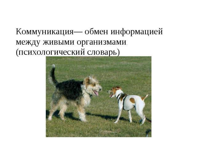 Коммуникация— обмен информацией между живыми организмами. (психологический словарь)