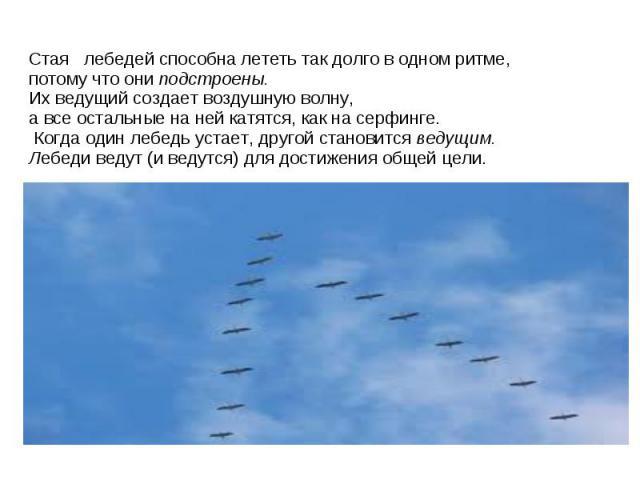 Стая лебедей способна лететь так долго в одном ритме, потому что ониподстроены. Их ведущий создает воздушную волну, а все остальные на ней катятся, как на серфинге. Когда один лебедь устает, другой становитсяведущим. Лебеди ведут (и ведутся) для д…