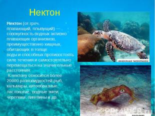 Нектон(от греч.плавающий, плывущий)—совокупность водных активноплавающих орган