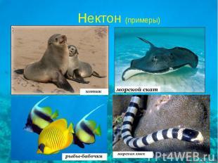 Нектон (примеры)