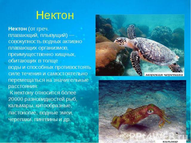 Нектон(от греч.плавающий, плывущий)—совокупность водных активноплавающих организмов,преимущественно хищных,обитающих в толщеводы и способных противостоятьсиле течения и самостоятельноперемещаться на значительныерасстояния. К нектону относится боле…