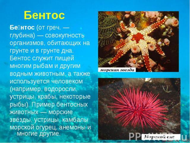 Бентос(отгреч.—глубина)— совокупностьорганизмов, обитающих нагрунте и в грунте дна.Бентос служит пищеймногим рыбам и другимводным животным, а такжеиспользуется человеком(например, водоросли,устрицы, крабы, некоторыерыбы). Пример бентосныхживотны…