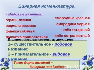 Бинарная номенклатура. Видовые названия:герань леснаярадиола розоваяфиалка собач