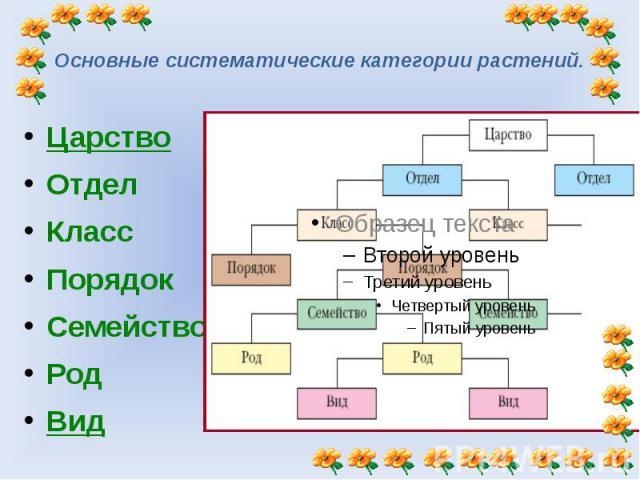 Основные систематические категории растений. Царство ОтделКлассПорядокСемействоРодВид