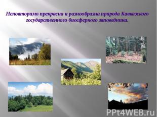 Неповторимо прекрасна и разнообразна природа Кавказского государственного биосфе