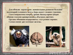 Для обезьян характерно значительное развитие большие полушарий головного мозга.