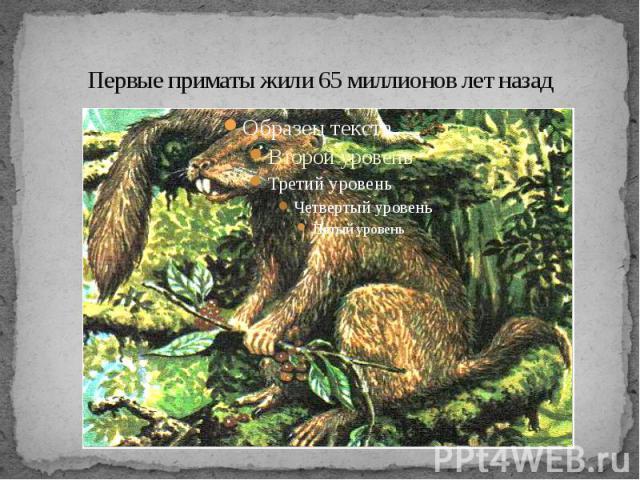 Первые приматы жили 65 миллионов лет назад