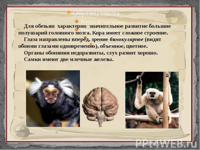 Для обезьян характерно значительное развитие большие полушарий головного мозга. Кора имеет сложное строение. Глаза направлены вперед, зрение бинокулярное (видят обоими глазами одновременно), объемное, цветное. Органы обоняния недоразвиты, слух разви…