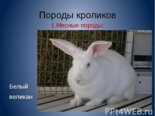 Породы кроликов1.Мясные породы:Белый великан