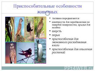 Приспособительные особенности животных Активно передвигаютсяконечности для перед