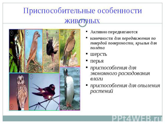 Приспособительные особенности животных Активно передвигаютсяконечности для передвижения по твердой поверхности, крылья для полёташерстьперьяприспособления для экономного расходования влаги приспособления для опыления растений