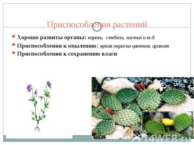 Приспособления растений Хорошо развиты органы: корень, стебель, листья и т.д.Приспособления к опылению: яркая окраска цветков, ароматПриспособления к сохранению влаги