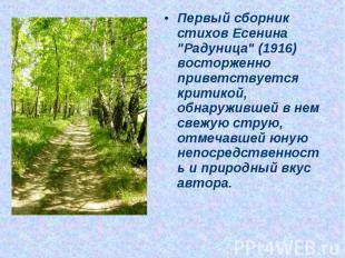 """Первый сборник стихов Есенина """"Радуница"""" (1916) восторженно приветствуется крити"""