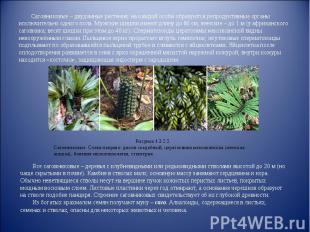 Саговниковые – двудомные растения; на каждой особи образуются репродуктивные орг