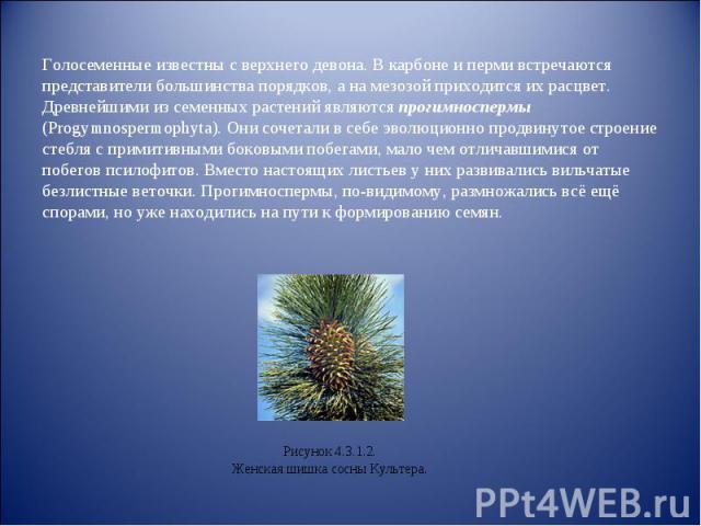 Голосеменные известны с верхнего девона. В карбоне и перми встречаются представители большинства порядков, а на мезозой приходится их расцвет.Древнейшими из семенных растений являются прогимноспермы (Progymnospermophyta). Они сочетали в себе эволюци…