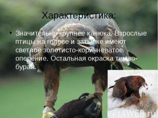 Характеристика:Значительно крупнее канюка. Взрослые птицы на голове и затылке им