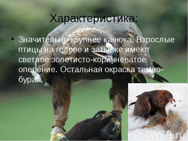 Характеристика:Значительно крупнее канюка. Взрослые птицы на голове и затылке имеют светлое золотисто-коричневатое оперение. Остальная окраска темно-бурая.
