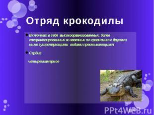 Отряд крокодилы Включает в себя высокоорганизованных, более специализированных ж