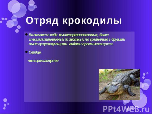 Отряд крокодилы Включает в себя высокоорганизованных, более специализированных животных по сравнению с другими ныне существующими видами пресмыкающихся.Сердце четырехкамерное