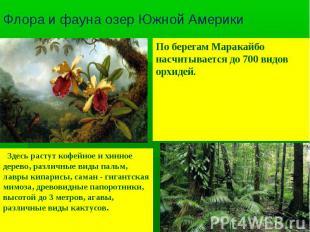 Флора и фауна озер Южной Америки По берегам Маракайбо насчитывается до 700 видов