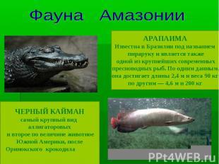 Фауна Амазонии ЧЕРНЫЙ КАЙМАНсамый крупный вид аллигаторовых и второе по величине