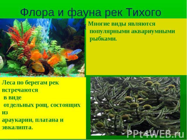 Многие виды являются популярными аквариумными рыбками. Леса по берегам рек встречаются в виде отдельных рощ, состоящих из араукарии, платана и эвкалипта.