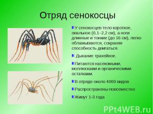 У сенокосцев тело короткое, овальное (0,1–2,2 см), а ноги длинные и тонкие (до 1