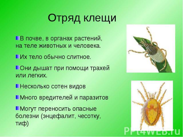 В почве, в органах растений, на теле животных и человека. Их тело обычно слитное.Они дышат при помощи трахей или легких. Несколько сотен видовМного вредителей и паразитовМогут переносить опасные болезни (энцефалит, чесотку, тиф)