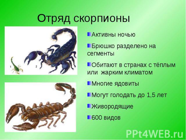 Активны ночьюБрюшко разделено на сегментыОбитают в странах с тёплым или жарким климатомМногие ядовитыМогут голодать до 1,5 летЖивородящие600 видов