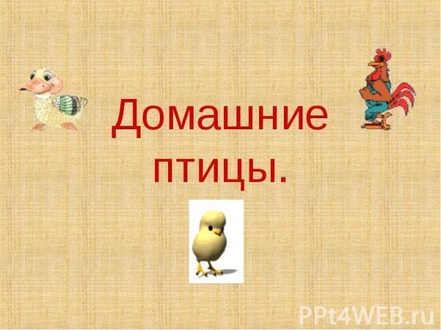 Домашние птицы.