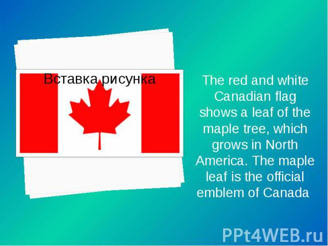 The red and white Canadian flag shows a leaf of the maple tree, which grows in North America. The maple leaf is the official emblem of Canada The red and white Canadian flag shows a leaf of the maple tree, which grows in North America. The maple lea…