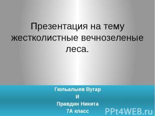 Презентация на темужестколистные вечнозеленые леса.Гюльалыев ВугарИПравдин Никит