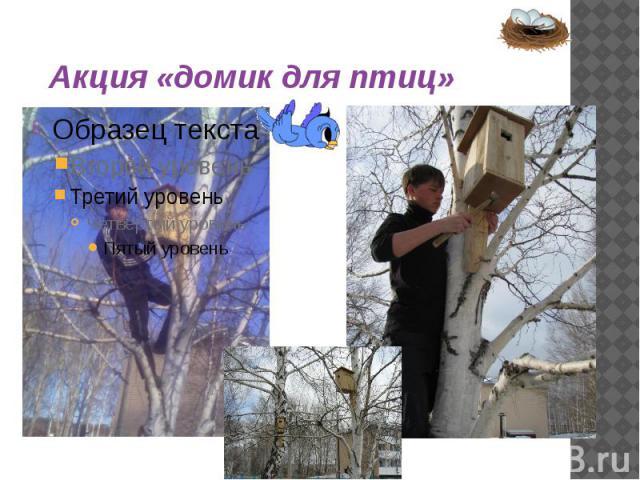 Акция «домик для птиц»