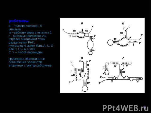 """а – """"головка молотка"""", б – шпилька, в – рибозим вируса гепатита , г – рибозим Neurospora VS. Стрелки обозначают точки расщепления РНК; нуклеозид N может быть A, U, G или C, H – A, U или C, Y – любой пиримидин; приведены общепринятые обозна…"""