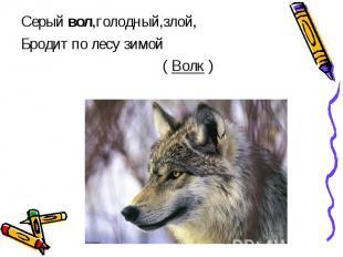 Серый вол,голодный,злой,Бродит по лесу зимой ( Волк )