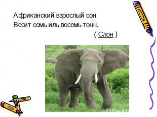 Африканский взрослый сон Весит семь иль восемь тонн. ( Слон )