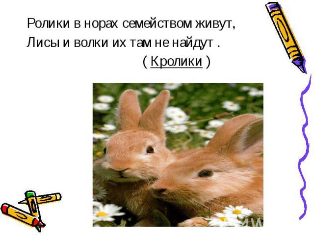 Ролики в норах семейством живут,Лисы и волки их там не найдут . ( Кролики )