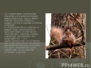 На территории заповедник охраняются и многие редкие виды животных. Здесь живет б