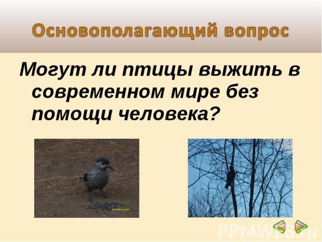 Основополагающий вопрос Могут ли птицы выжить в современном мире без помощи человека?