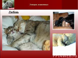 Эмоции животных Любовь