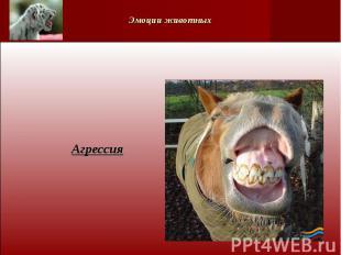 Эмоции животных Агрессия