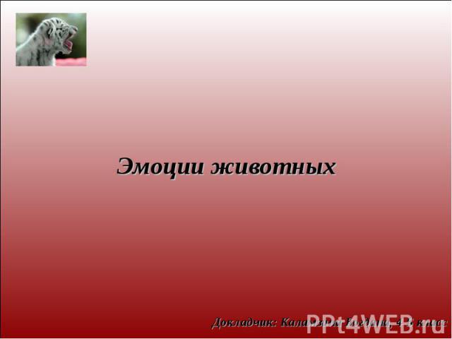 Эмоции животныхДокладчик: Каламзина Богдана, 4 Б класс