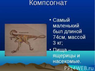 Компсогнат Самый маленький был длиной 74см, массой 3 кг;Пища – ящерицы и насеком
