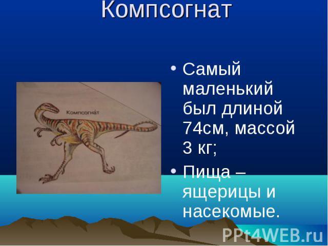 Компсогнат Самый маленький был длиной 74см, массой 3 кг;Пища – ящерицы и насекомые.