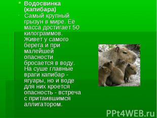 Водосвинка (капибара) Самый крупный грызун в мире. Её масса достигает 50 килогра