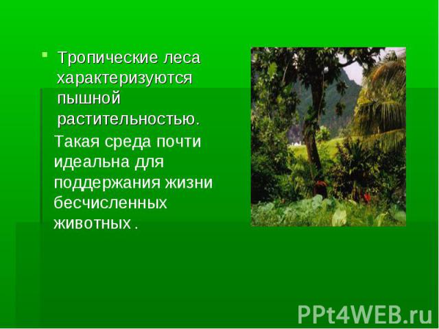 Тропические леса характеризуются пышной растительностью.Такая среда почти идеальна для поддержания жизни бесчисленных животных .